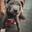 saved pup pic